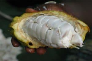 cacao prijs